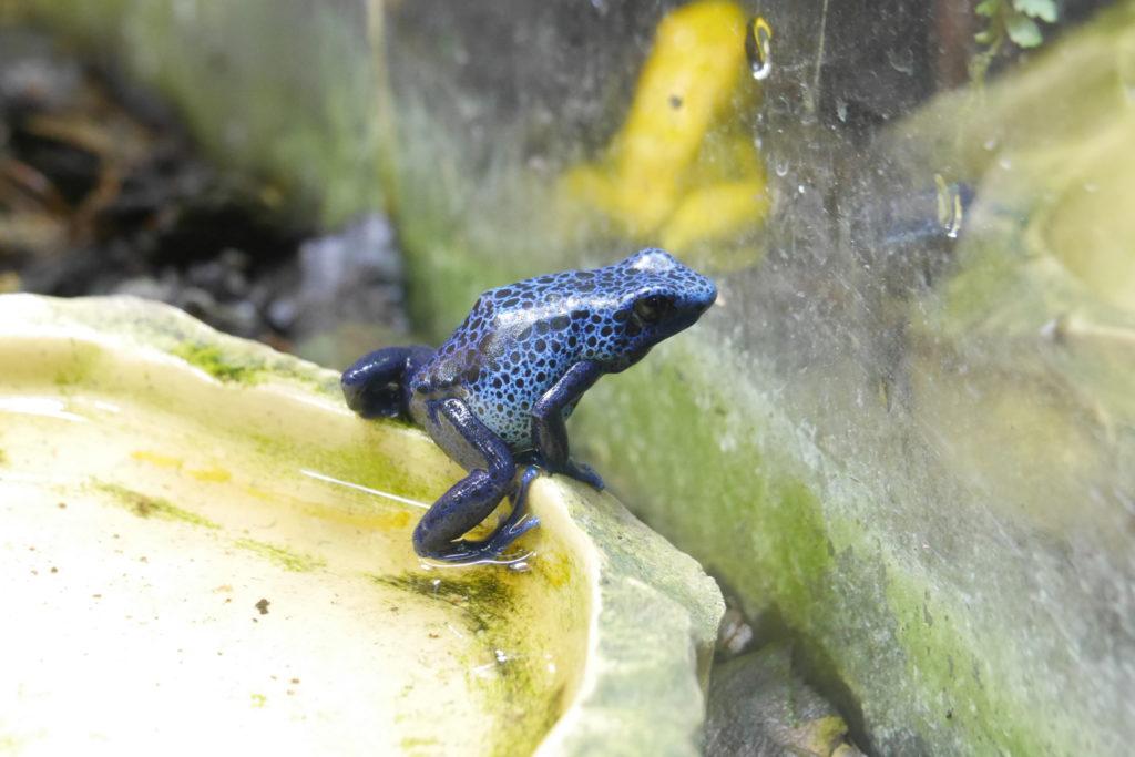 skansen akvariet