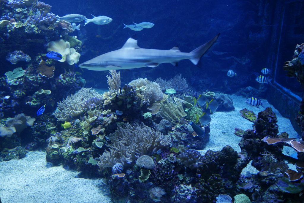 Haj Akvarium