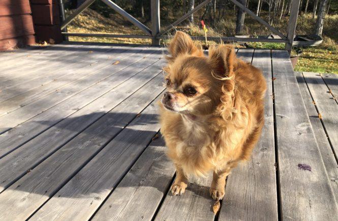 Chihuahuan Basse