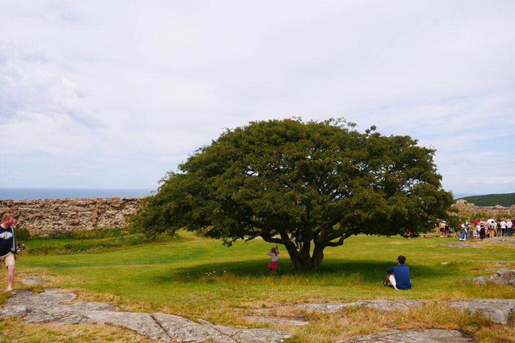 Utsikten vid Hammershus